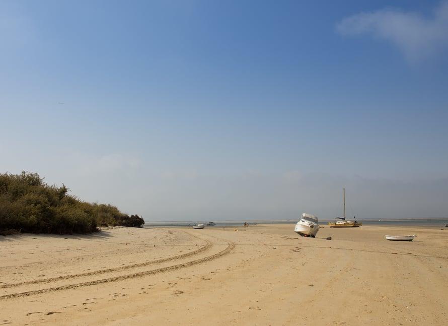 Laskuveden aikaan on turha lähteä veneellä liikenteeseen. Mutta nousuvettä odotellessa voi kaivaa itselleen hiekasta ilmaisen aterian!