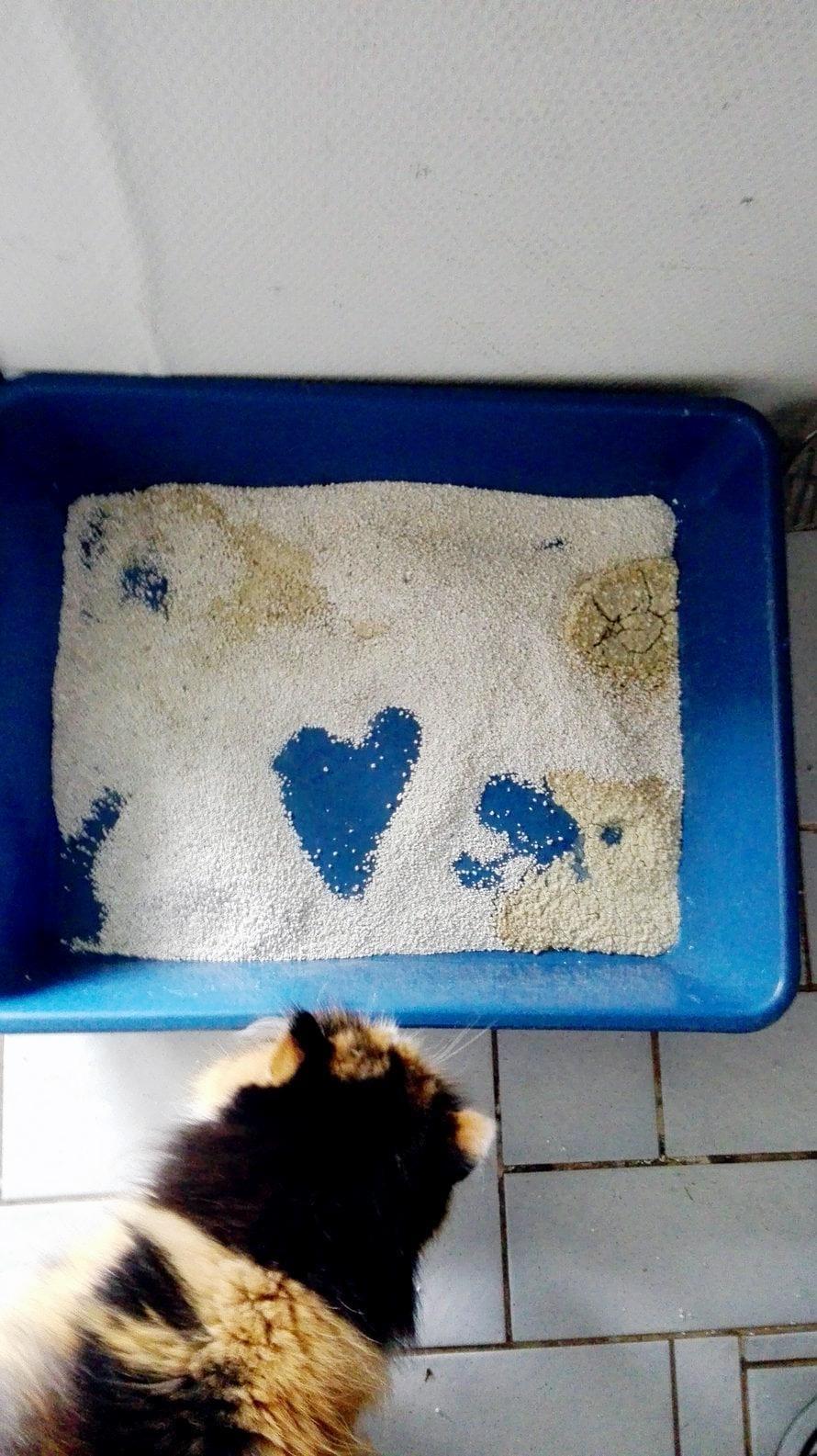 15-vuotias Roosa-kissa oli viikonlopun yksin kotona. Olikohan tämä merkki, että ihanaa, kun saavuin kotiin? Roosa