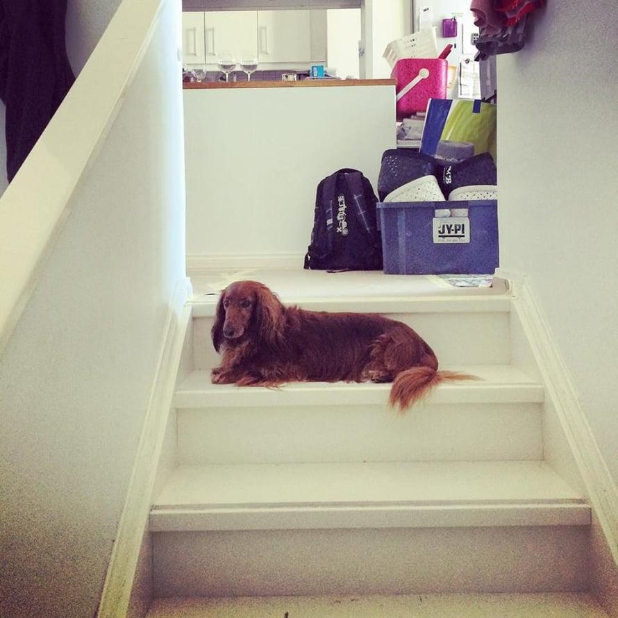 Tommi ei pitänyt uuden kotimme liukkaista portaista.