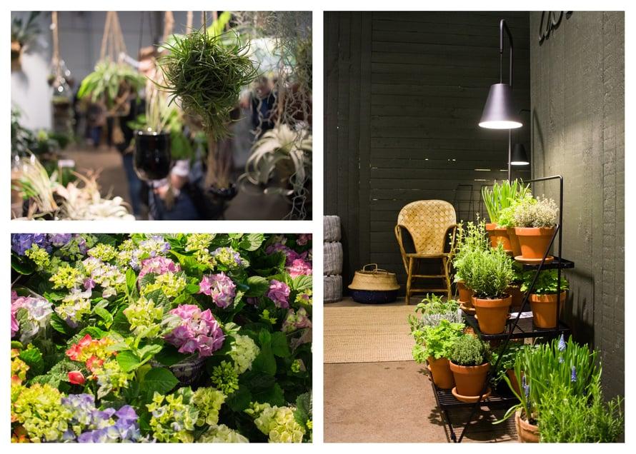Hortensiapelto ilahdutti silmää! Samoin Asun-lehden ja Kekkilän yhteisellä osastolla olleet rehevät parvekeratkaisut. Huone ett rum -sisustuskaupan kauniit ilmakasvit keräsivät paljon ihmettelijöitä.