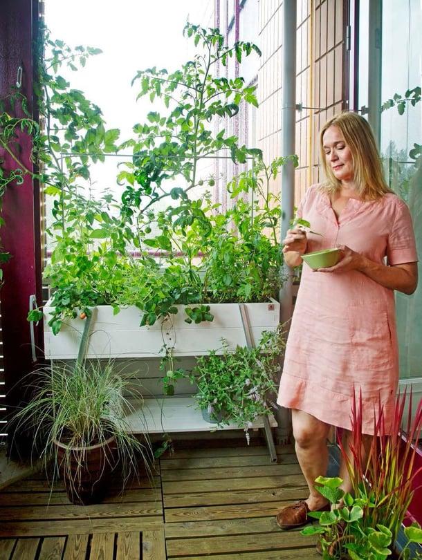 Kekkilän 90-litraisissa viljelylaatikoissa kasvit nousevat kaiteen yli valoon. Niissä kasvavat tomaatit, amppelimansikat ja yrtit. Koristeheinät lisäävät rentoa tunnelmaa, etualan ruukussa hurmesilkkiheinä 'Red Baron' ja rotkolemmikki.