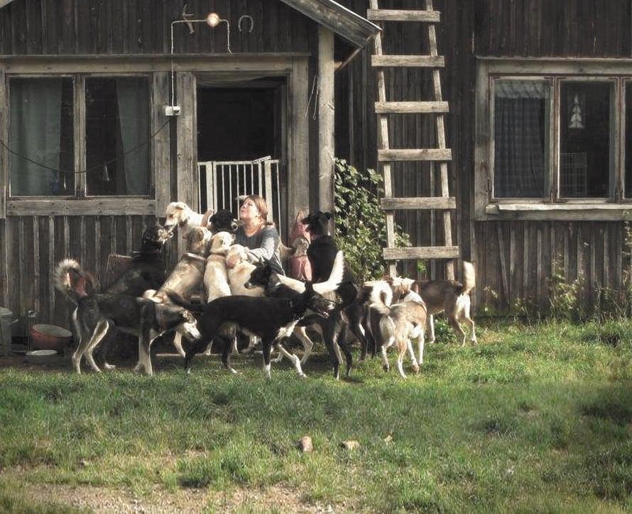 22 rekikoiran lauma pitää seuraa emännälleen Eliisalle.