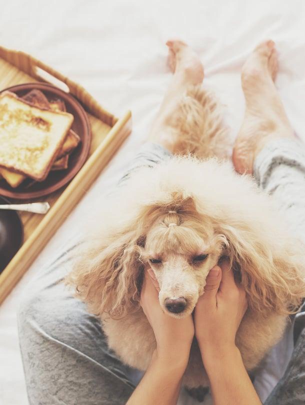 Ei ehkä arkinen, mutta mieltä hellivä rutiini se on tämäkin: yhteinen aamiainen sängyssä.