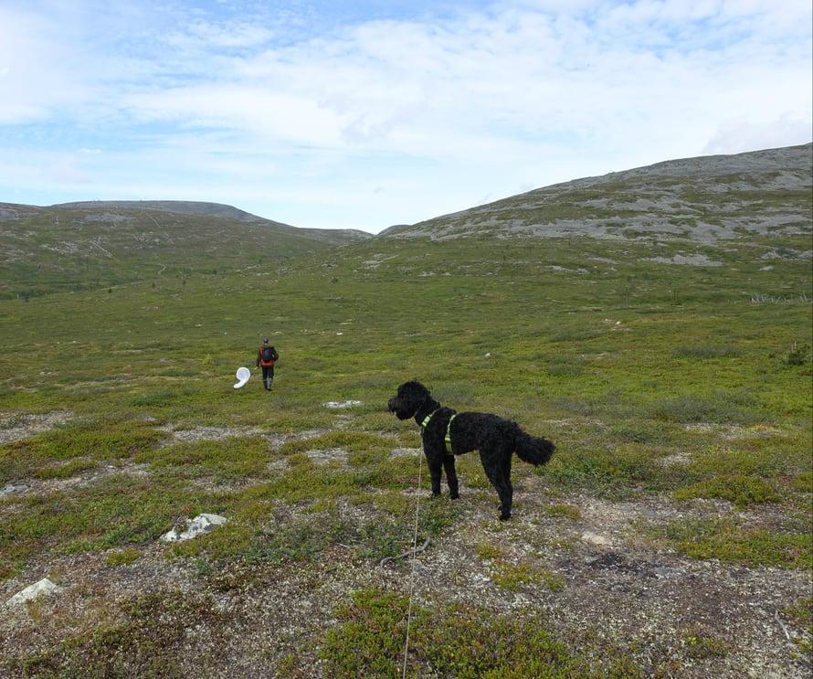 Hyvässä seurassa on mukavaa retkeillä. Koiramme Napsukin jaksoi reitin hienosti - mäkäräiset vain vähän vaivasivat sitä...